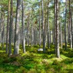 زراعة الاشجار