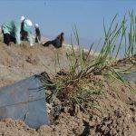 زراعة الاشجار في تركيا